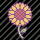 sunflower, flower, summer, spring