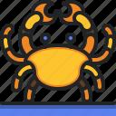 crab, beach, animals, aquatic, sea