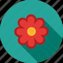 blossom, flower, garden, petals, plant, rose, spring
