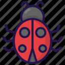 animal, insect, ladybug