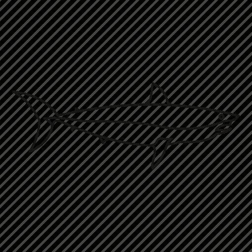 Animal, fish, line, ocean, outline, sea, shark icon - Download on Iconfinder