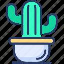 cactus, indoor, interior, mexico, plant, potted, succulent