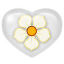 magnolia, media, social icon