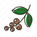 beans, brunch, coffee, plant icon