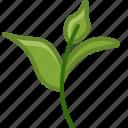 bio, ecology, leaves, nature, tea, tearoom, yumminky icon