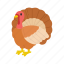 bird, thanksgiving, turkey, wild turkey icon