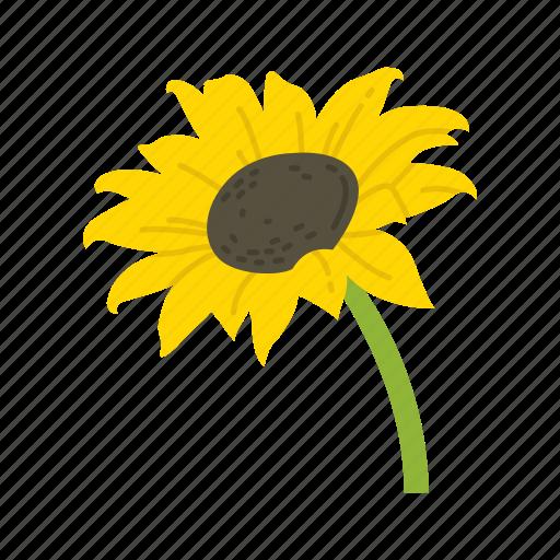 fall flower, flower, holiday flower, sunflower icon