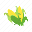 corn, corn husk, corn on the cob, farm icon