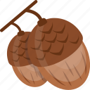 acorn, chestnut, dry fruit, nut, oak tree icon