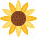 blossom, flower, gardening, nature, sunflower