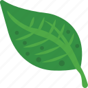 fresh leaf, green leaf, leaf, spring harvest, tree leaf