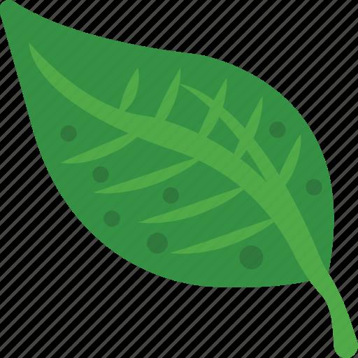 fresh leaf, green leaf, leaf, spring harvest, tree leaf icon