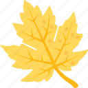 autumn harvest, autumn leaf, canadian flag, halloween, maple leaf