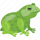 amphibian, animal, carnivorous, frog, rana tigrina icon