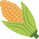 corn cob, fresh corn, maize, ripe corn, sweet corn icon