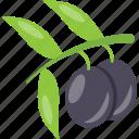 fruit, healthy fruit, plum, prune fruit, purple fruit icon