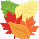 autumn leaves, colorful leaves, decoration leaves, dried leaves, leaves icon