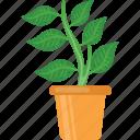 decoration, gardening, leafy plant, plant, plant vase icon