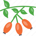fruit, rose, rose hep, rose hip, rose hips icon