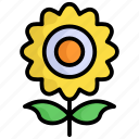 sunflower, flower, nature, plant, natural, seed, sun