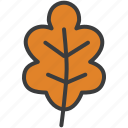 autumn, dry, leaf, leaves, oak, tree icon
