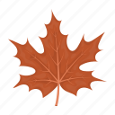leaf, tree, thanksgiving day, maple, autumn, plant