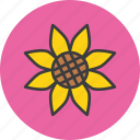 autumn, flower, sunflower, thanksgiving