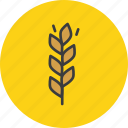 autumn, gluten, grain, harvest, millet, thanksgiving, wheat icon