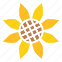 autumn, flower, sunflower, thanksgiving, hygge