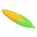 corn, isometric, maize