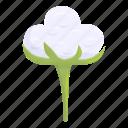 cotton, plant, organic, natural