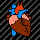 anatomy, heart, medical, organ, torso