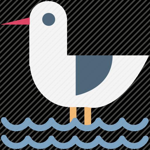 bath duck, duck, rubber duck, shower duck icon