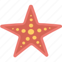 sea animals, sea life, sea star, starfish, starfish shell icon