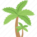 ocean trees, palm, palm trees, tropical palm, tropical trees icon