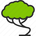 bonsai, eco, green, nature, tree