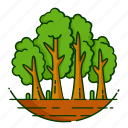 forest, leaf, nature, plant, tree