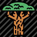baobab, biology, botanical, nature icon