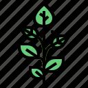 herbs, leaf, plant, spa icon