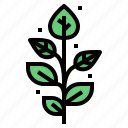 leaf, spa, plant, herbs