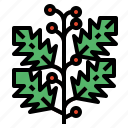 branches, holly, nature, plant icon