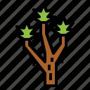 botanical, joshua, nature, tree icon