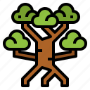 botanical, mangrove, nature, tree icon