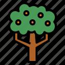 botanical, farming, nature, orange, tree
