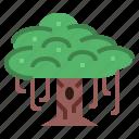 banyan, botanical, tree, yard