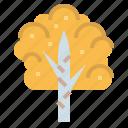 birch, botanical, ecology, tree