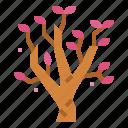 blossom, botanical, flower, magnolia