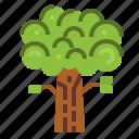 ecology, nature, oak, tree icon
