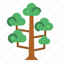 botanical, nature, sequoia, tree icon