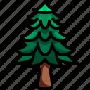 botanical, garden, gardening, pine, tree, yard